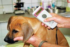microchip scan